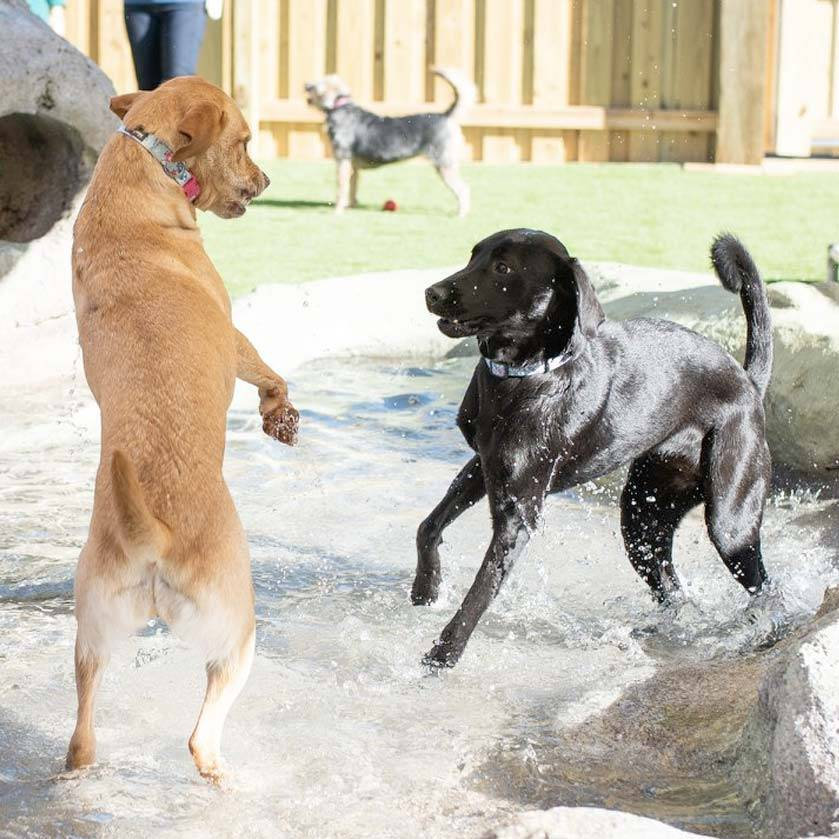 Cage free dog daycare is the best option for your pup!